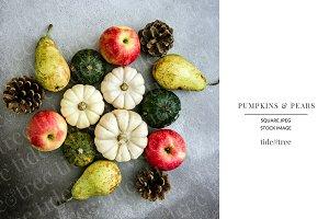 Pumpkins & Pears | Square No 4