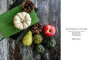 Pumpkins & Pears | Square No 2