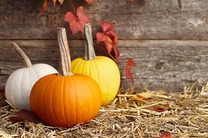Colorful fall pumpkins on old planks