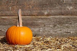 Orange fall pumpkin on old planks
