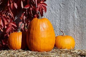 Colorful fall pumpkins composition