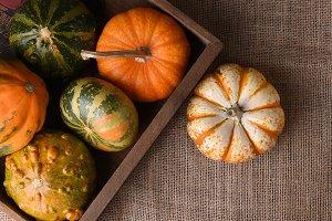 Overhead shot of ornamental gourds a