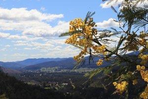 Acacia above alpine town