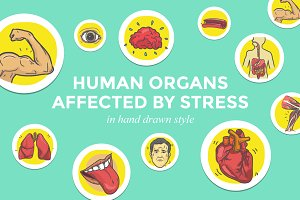 Human Organs Affected by Stress