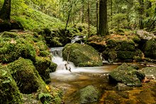 river with cascade in forest