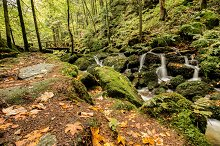River cascades in the autumn forest