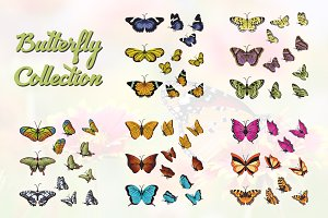 50+ Beautiful Butterflies Collection