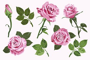 Pink vector roses elements set