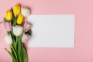 Bouquet of spring tulips with blank