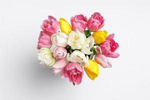 Tender spring tulip flowers isolated