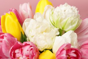 Tender blooming colorful tulips isol