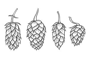 hand drawn beer hop