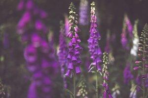 The Bellflowers
