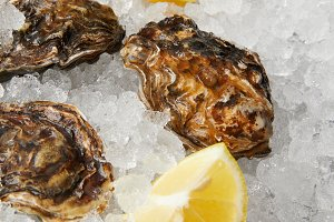 Refrigerated oysters with lemon slic