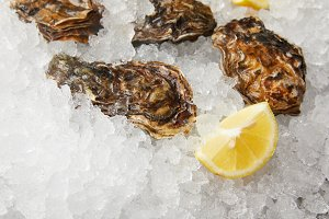 Cooled oysters refrigerated on ice w