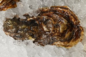 Gourmet seafood oyster chilled on ic
