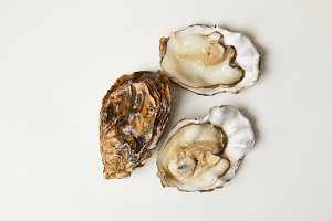 Open fresh oyster clams isolated on
