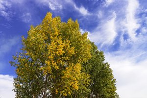 autumn fall tree with leaves