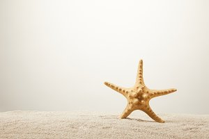 close up view of sea star on sand on