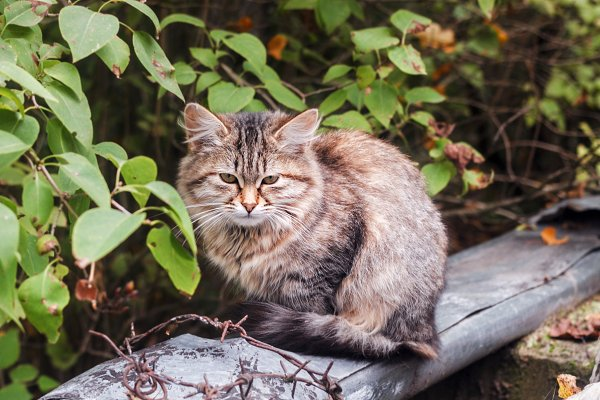 Animal Stock Photos - Homeless motley cat