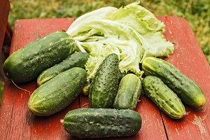 Fresh cucumbers from garden
