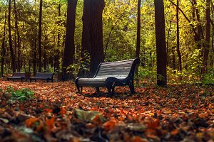 Benches in sunny fall park