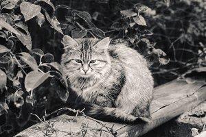 Homeless fur motley cat at in black