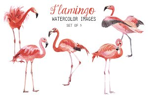 Watercolor Falmingo Clipart