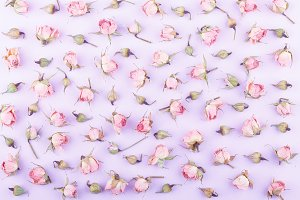 Background made from different rose