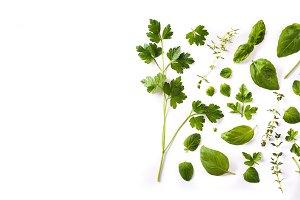 Green fresh aromatic herbs
