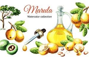 Marula. Watercolor collection