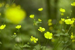 Many Many Yellow Flowers