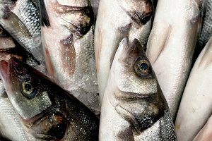 Fresh sea bass in the market