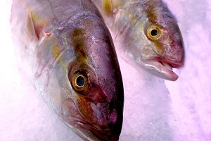 fresh tuna melva at market