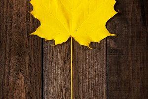 Autumn theme. Yellow leaf