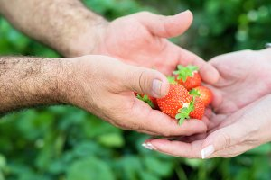 man and woman hands with strawberry