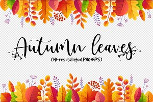 Textured autumn leaves (PNG+EPS)