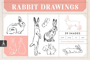 Rabbit Drawings