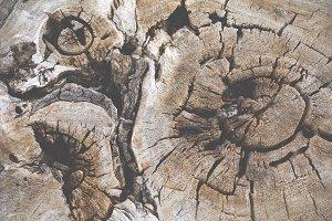 Old wood rings