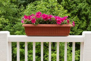 Colorful flowers in bloom on railing