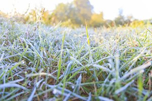 green grass is covered with frost in