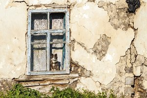old abandoned house and a cat