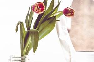 Tulips in a glass jar