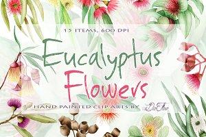 Eucalyptus Flowers Clip Art