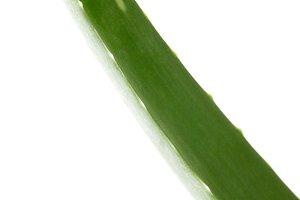 closeup view of aloe vera leaf isola