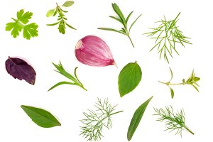 Fresh spices and herbs isolated on