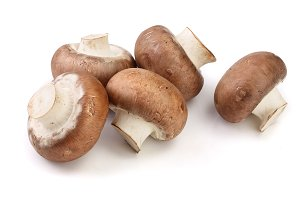 Royal Brown champignon isolated on