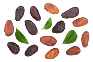 cocoa bean with leaf isolated on