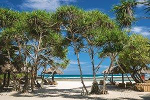 White sand beach, tropical trees