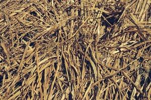 Padi Straw Pile